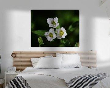 Kleine weiße Blume von Pim van der Horst