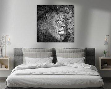 Löwen in Schwarz-Weiß von Peter Bolman