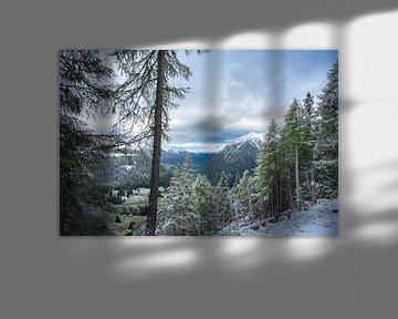 Treeline Austria van Sonny Vermeer