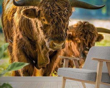 Nieuwsgierige Schotse Hooglander II van Teun Ruijters