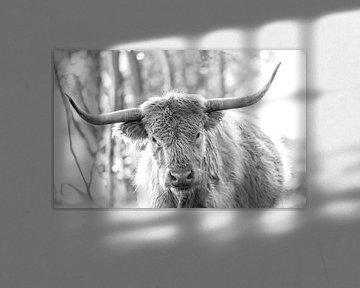 Schotse Hooglander zwartwit portret I van Teun Ruijters