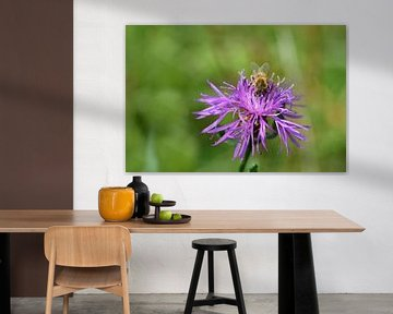 Biene auf wiesenblume von Ulrike Leone