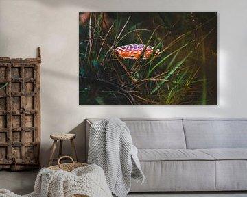Fliegenpilz von Patrick  van Dasler