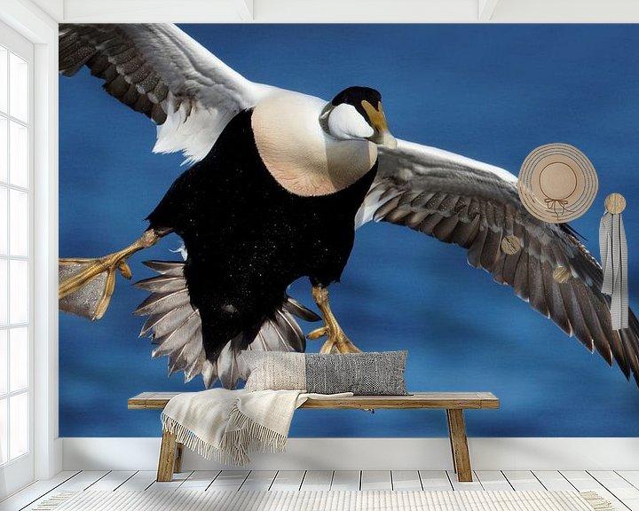 Sfeerimpressie behang: Mannetje Eider in de vlucht; van AGAMI Photo Agency