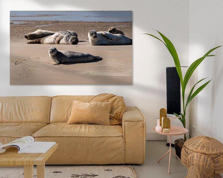 Sfeerimpressie: Zeehonden van Ingrid Aanen