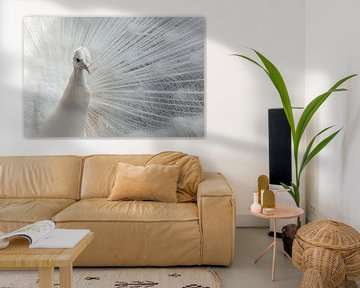 Stralende witte pauw, licht, helder, schoonheid, slaapkamer. van Leon Saanen