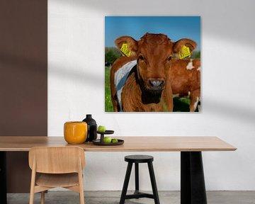 vache sur Claudia Bouman