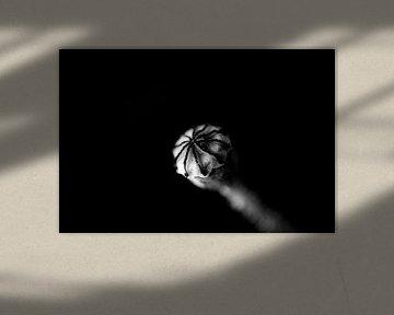 Button Poppy (schwarz-weiß) von SuparDisign