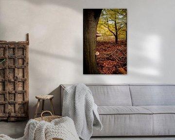 Herbstfarben in den Niederlanden