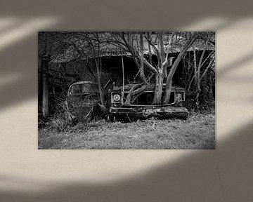 Baum wächst mit dem Auto von Robbert Wille