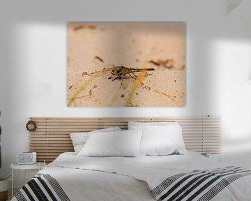 Libelle im Sand von Merijn Loch