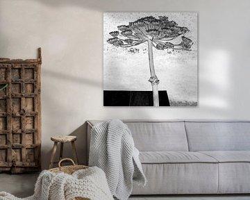 Riesenbärenklau in grafischem Schwarz-Weiß von Affect Fotografie