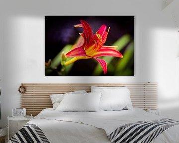 Rote Lilie von Rob Boon