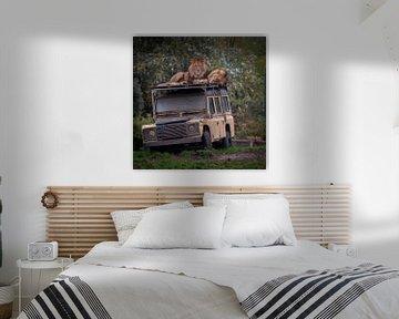 Leeuwen op het dak van een jeep van Suzanne Schoepe