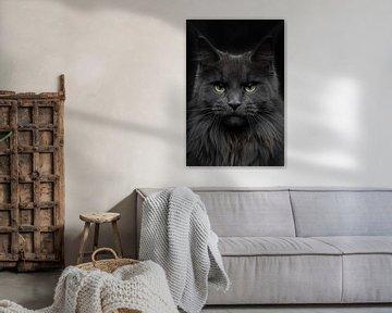 Close-up van een Maine Coon kat van Nikki IJsendoorn