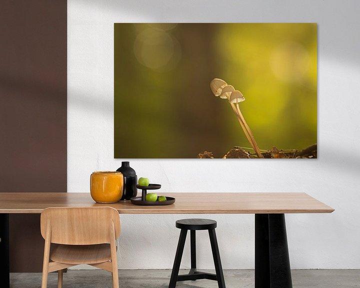 Sfeerimpressie: Herfst sfeer van Frits Remmers