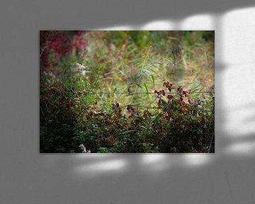 Herbstliche Farben von Michel Van Giersbergen