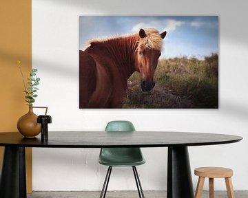Paarden op de Veluwe II van Luis Boullosa