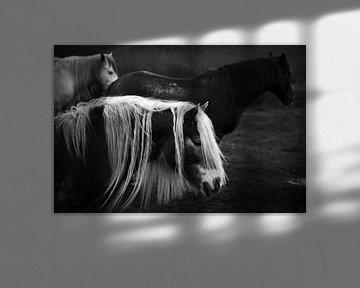Paarden in Schiermonnikoog I van Luis Boullosa