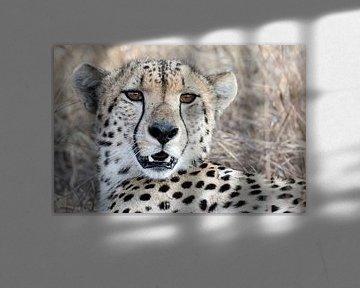 Cheetah Portret van Angelika Stern