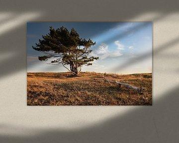 Naaldboom in de duinen van Randy Riepe