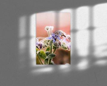 Violette Blume im Morgentau von Lindy Schenk-Smit