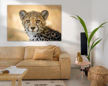 Portret jachtluipaard / cheetah van Vincent de Jong