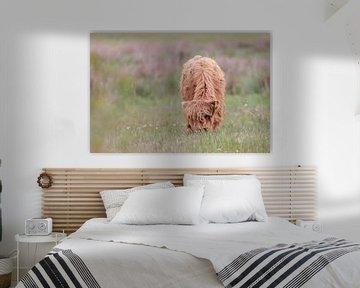 Schotse Hooglander kalf van Karin van Rooijen Fotografie