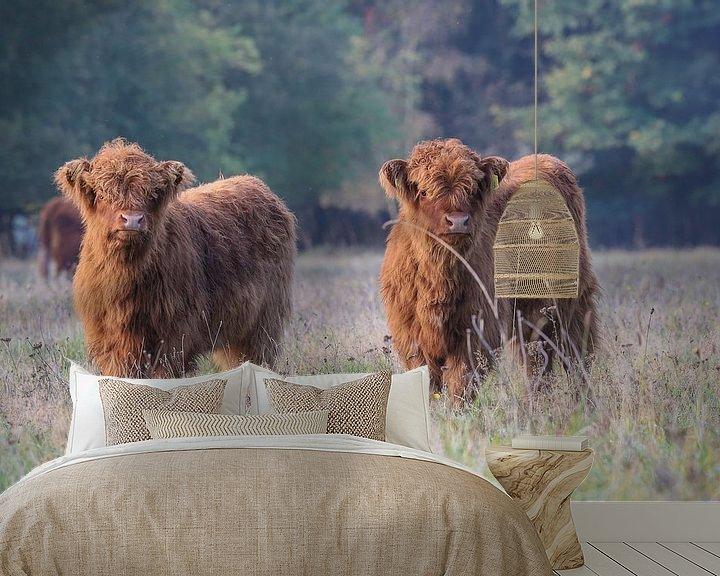 Sfeerimpressie behang: 2 Nieuwsgierige Schotse Hooglander kalfjes van Karin van Rooijen Fotografie