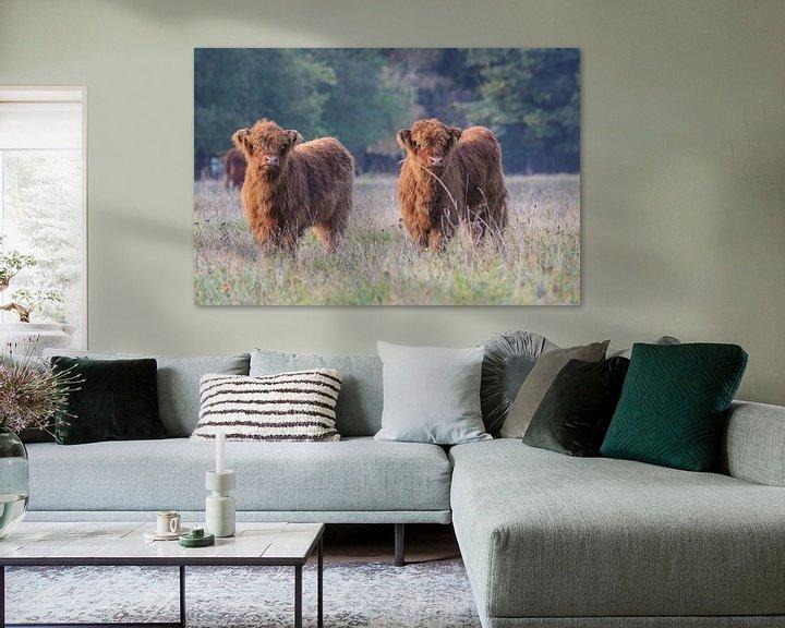 Sfeerimpressie: 2 Nieuwsgierige Schotse Hooglander kalfjes van Karin van Rooijen Fotografie