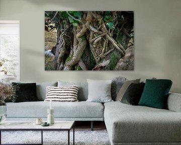 sprookjesachtige boomstam in Ierland van Bo Scheeringa Photography