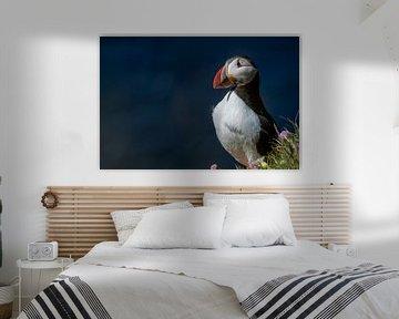 Parmantige papegaaiduiker van Manon Verijdt