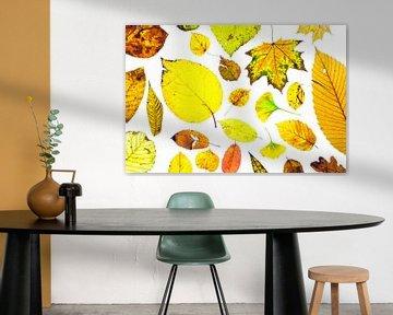Kleurrijke herfstbladeren op een witte achtergrond van Carola Schellekens