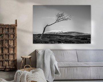 Einsamer Baum in Irland von Bo Scheeringa Photography