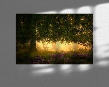 Droombankje onder Eikenboom van Jeroen Lagerwerf