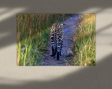 Luipaard op de weg in Botswana van Daphne de Vries
