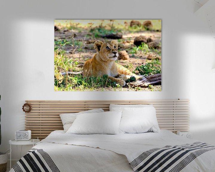 Beispiel: Träumendes Löwenjunges in der Serengeti von Daphne de Vries