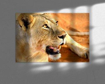 Löwin ruht sich nach ihrem Abendessen aus von Daphne de Vries