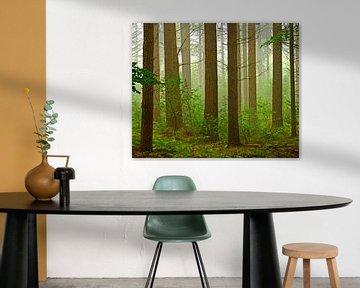 Stam-Hoofden (Stammen in het bos) van Caroline Lichthart