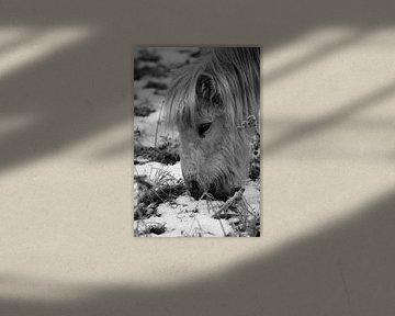 Pony auf der Wiese von Emma Wilms
