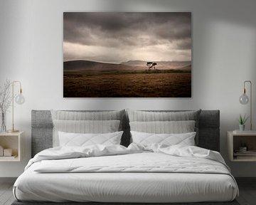 Einsamer Baum im Moorland von Irland von Bo Scheeringa Photography