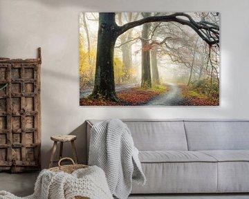 Der Herbstpfad von Lars van de Goor