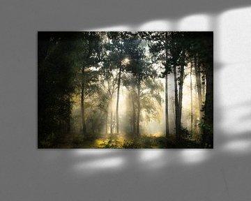 Sprookjesbos van Koen Boelrijk Photography