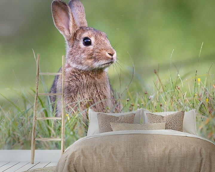 Sfeerimpressie behang: Lief konijn van Pim Leijen