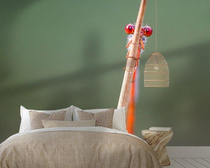 Sfeerimpressie behang: Damselfly van Pim Leijen
