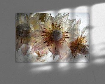 Protea-bloemen in ijs van Marc Heiligenstein