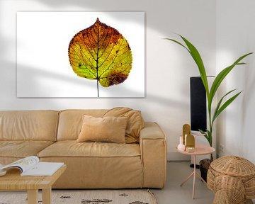 Kleurrijk herfstblad op een witte achtergrond van Carola Schellekens