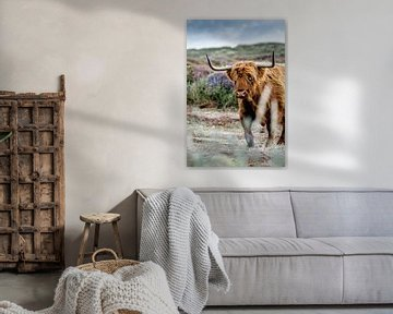 Texel Highlander van Kevin van den Hoven