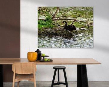 Zwarte zwaan van Merijn Loch