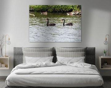 zwarte zwanen van Merijn Loch